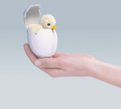 Chick_in_egg